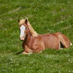 7544 Icelandic Horse