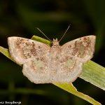 7937 Moth, Costa Rica