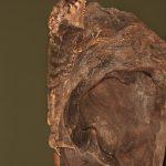 2022 Casque-headed Lizard (Corytophanes cristatus), Arenal Oasis Lodge, Costa Rica