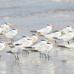 7911 Terns, Bolivar Peninsula, Texas