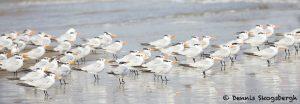 7911 Terns, Bolivar Peninsula, Texas