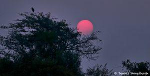 8090 Sunset, Pixaim River, Pantanal, Brazil