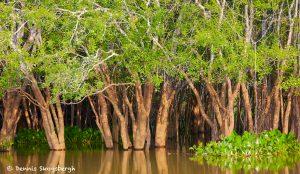 8099 Landscape, Pixaim River, Pantanal, Brazil