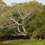 8215 Landscape, Pixaim River, Pantanal, Brazil