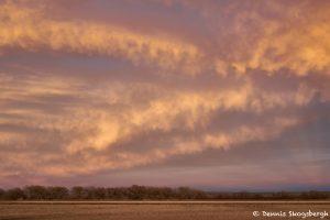 8413 Sunset, Bosque del Apache, NM