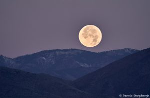 8415 Moonset, Bosque del Apache, NM