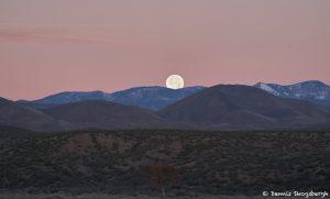 8416 Moonset, Bosque del Apache, NM