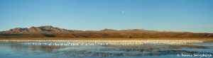 8346 Panorama, Lift-off Pond, Bosque del Apache, NM