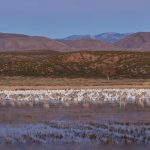 8347 Panorama, Lift-off Pond, Bosque del Apache, NM