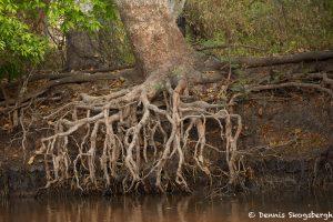 8139 Landscape, Pixaim River, Pantanal, Brazil