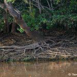 8140 Landscape, Pixaim River, Pantanal, Brazil