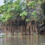 8274 Landscape, Pixaim River, Pantanal, Brazil