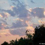 8276 Landscape, Pixaim River, Pantanal, Brazil