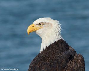 9267 Bald Eagle, Homer, Alaska