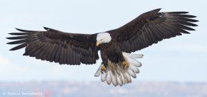 9272 Bald Eagle, Homer Alaska